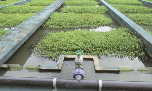 Zoom sur la formation Maîtrise de la gestion intégrée des eaux pluviales
