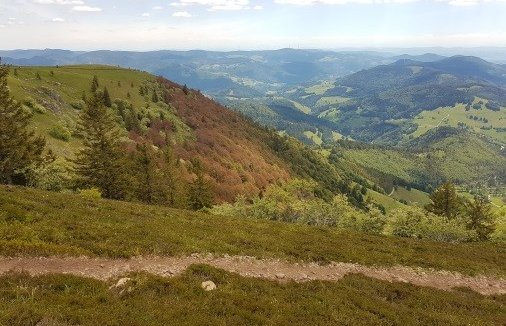 Projet Interreg Rhin Supérieur Clim'Ability Design