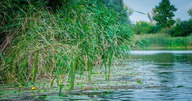 Atelier milieux aquatiques : Biodiversité et services écosystémiques - Reims